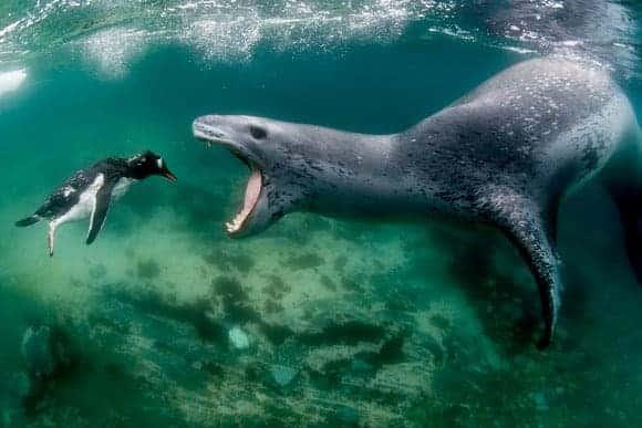 © Amos Nachoum / WaterHouse Marine Images Offset