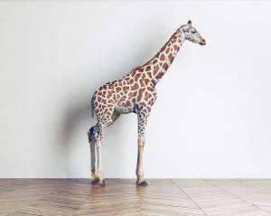 Erweiterte Lizenz kaufen - die besten Stockfoto Lizenzen im Vergleich - adpic giraffe