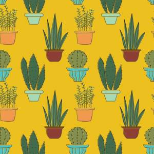 Erweiterte Lizenz kaufen - die besten Stockfoto Lizenzen im Vergleich - adpic vector kaktus