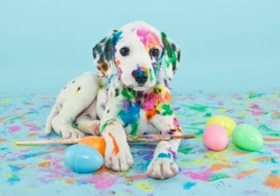 Die 60 meist heruntergeladenen Bilder 2018 von Top Bildagenturen im Vergleich! - fotoskaufen adobestock dalmatienpuppy