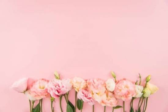 Die 60 meist heruntergeladenen Bilder 2018 von Top Bildagenturen im Vergleich! - fotoskaufen depositphotos flowers