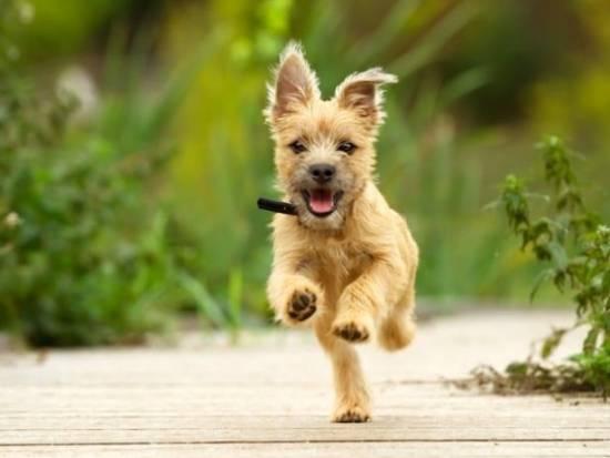 Die 60 meist heruntergeladenen Bilder 2018 von Top Bildagenturen im Vergleich! - fotoskaufen depostiphotos terrierpuppy