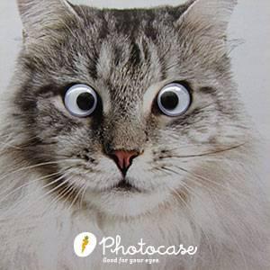 Die schrägsten, hipsten und kuriosesten Stockfotos und wo man sie finden kann! - photocase ba2
